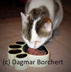 katzenlexikon von katzengeburten katzenfutter