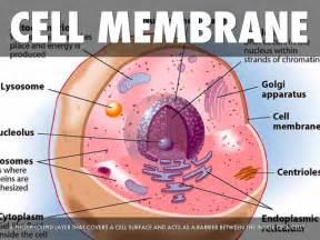 Cell Membrane Parts