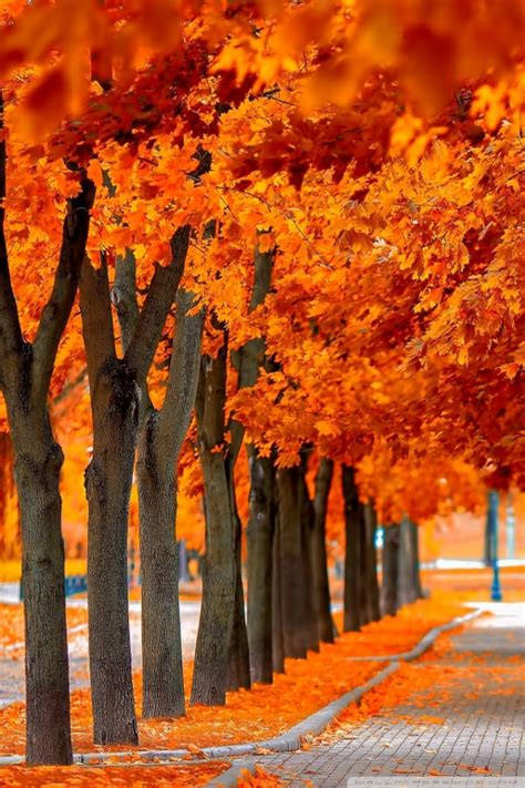 Orange Fall Wallpaper by 30 Free Fall Iphone Backgrounds Freecreatives