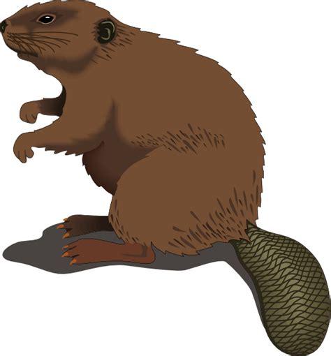 beaver standing clip art  clkercom vector clip art