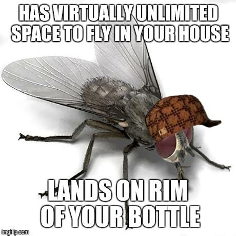 Fly Meme - scumbag house fly imgflip