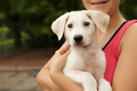 how to dogs dogs by debin dog rehoming service