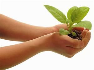 Viveros Abaurre   Planta Ecológica y Hortícola