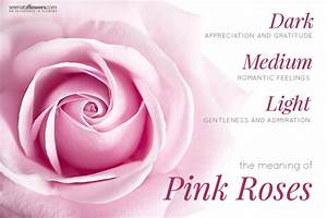 meaning of pink rose in hindi