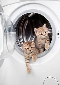 Laver Un Chaton : les pr cautions prendre avant l arriv e d 39 un chaton dans ~ Nature-et-papiers.com Idées de Décoration