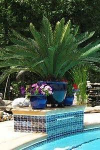 good  large pots   pool