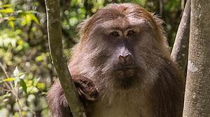 18 Various Types Of Monkeys Breed Found On Indian Mainland
