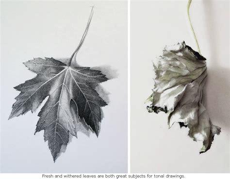 drawn leaves shaded leaf pencil   color drawn
