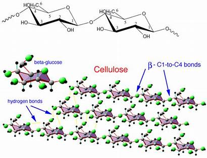 Cellulose Molecules Water Polysaccharides Polymerization Grafting Glucose