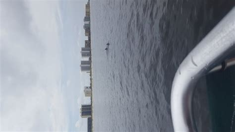 Glass Bottom Boat Tours Alabama by Glass Bottom Dolphin Tours Orange What To