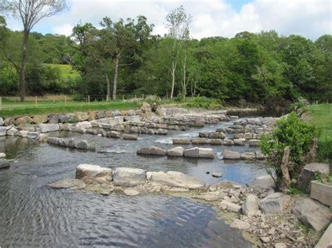 bumper year  fish   river mole westcountry