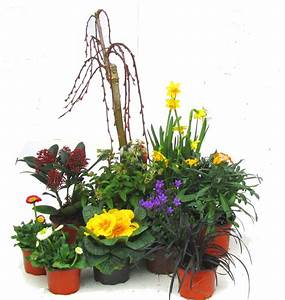 Pflanzen Für Innen : pflanzen set f r schale und k bel gro fr hling pflanzen ~ Michelbontemps.com Haus und Dekorationen