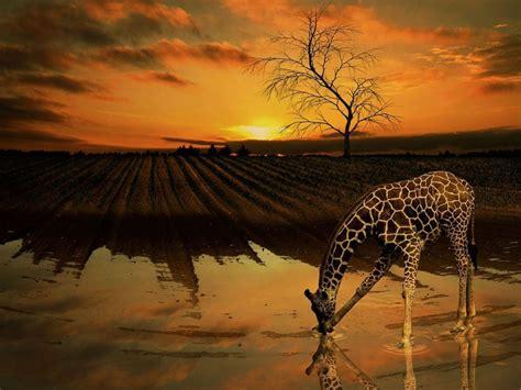 Amazing Wallpapers Animals - 50 amazing wildlife animal wallpapers hongkiat