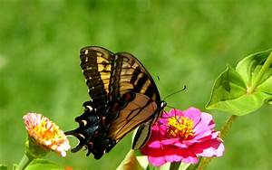 beautiful spring butterfly | spring time | Pinterest ...