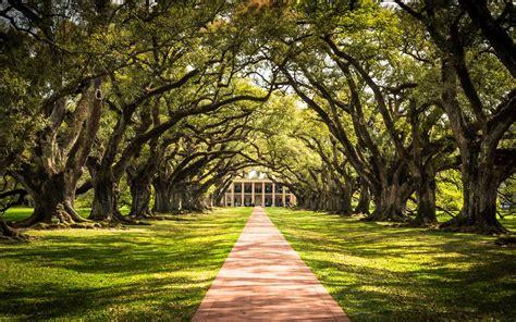 spring alley oak springtime road take louisiana american plantation travel trips