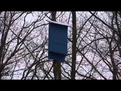 bat house   pole youtube