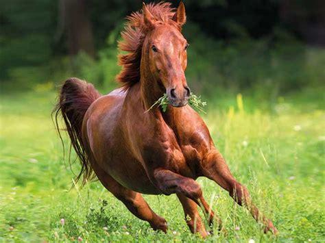 training und futter muskelaufbau beim pferd