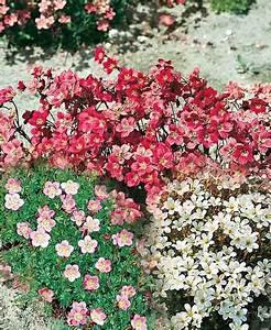 Welche Pflanzen Eignen Sich Für Einen Steingarten : steingarten anlegen so einfach geht s otto ~ Michelbontemps.com Haus und Dekorationen