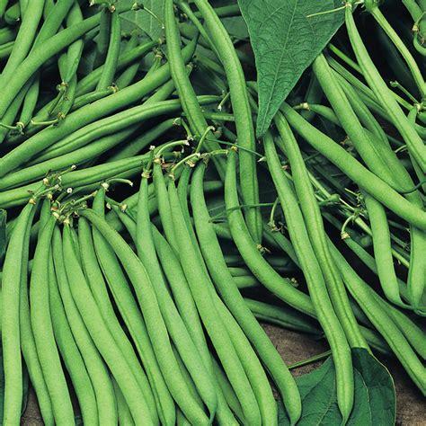 Climbing French Bean Plants Cobra