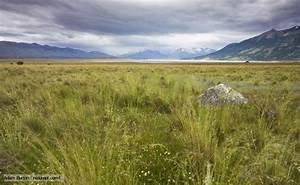 Temperate Grasslands Temperate Grasslands