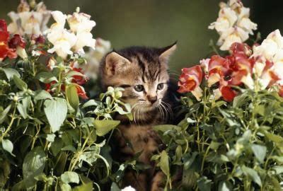 Die Katzen Vom Garten Fernhalten  Information, Mittel Und