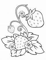Strawberry Coloring Activity Pages Fruit Chosen Illustrations sketch template