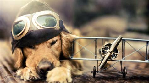 adorable dog wallpaper hd hd wallpapers desktop images