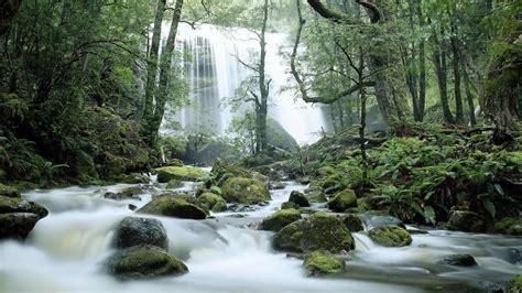 tasmania waterfall bing wallpaper