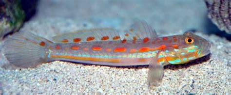 fishy aquarium livestock fish orange