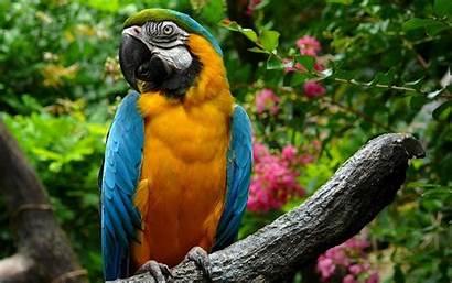 Parrot Orange Parrots Wallpapers Bird Birds Animals