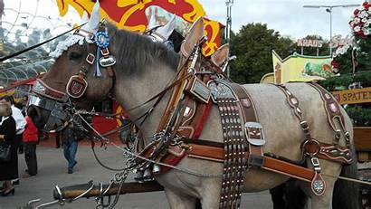 Horse Draft Belgian Harness Parade Oktoberfest Decorated