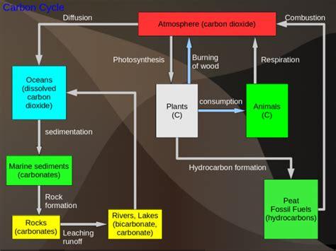 biogeochemical cycles wikieducator
