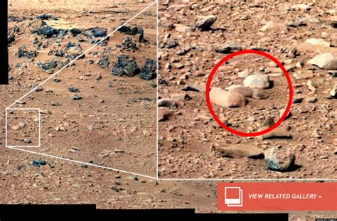 Mars 'Rat' Won't Be Analyzed By Rover, As 'Curiosity ...