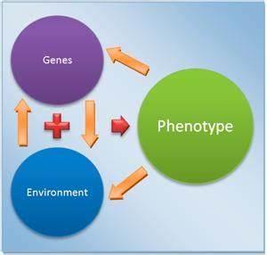 Disease genomics a false paradigm per new Harvard study ...
