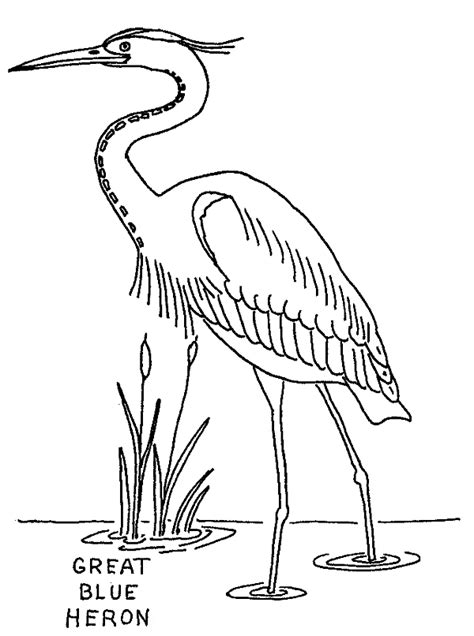 great blue heron coloring page animals town animals color sheet great blue heron