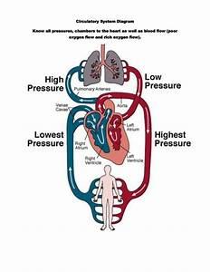 Circulatory System  Through External Respirtaion  A Gas