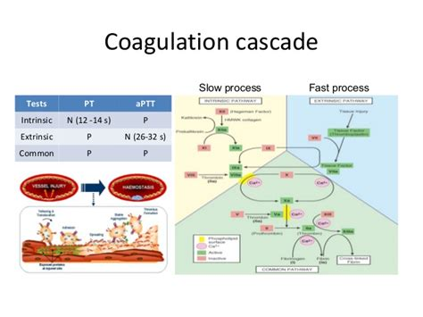 Drugs Affecting Coagulation And Anticoagulants