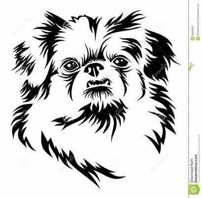 Pekingese Dog Pekinese Head Drawing Clipart Shih