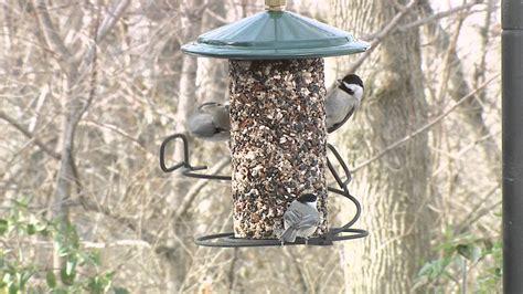 seed cylinder feeder video wild birds unlimited wild