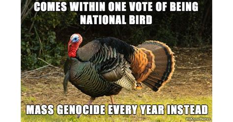 Turkey Memes - turkey meme 28 images these 10 turkey memes are perfect for thanksgiving thanksgiving