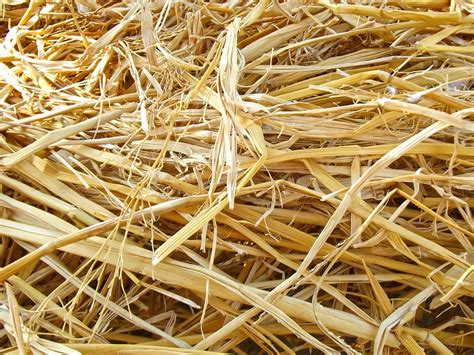 Free photo: Hay, Dried Up, Natural, Yellow - Free Image on ...