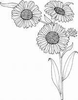 Sunflower Coloring Realistic Pages Printable K5worksheets Worksheets Flower Supercoloring Via Books sketch template