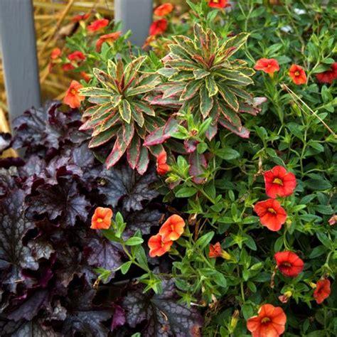fall garden plants fall container garden ideas