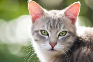 all about cats all about cats petopedia