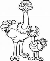 Coloring Ostrich Adult Young Ostriches Funny Cartoon sketch template