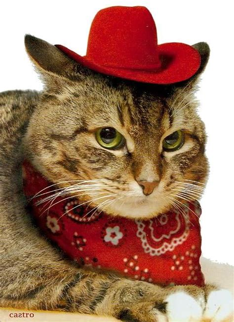 Press the ← and → keys to navigate the gallery, 'g' to view the gallery, or 'r' to view a random image. Image result for cats in cowboy hats | Cats in Cowboy Hats ...