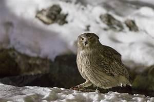 "Help Document the World's 389 ""Endangered"" Bird Species ..."