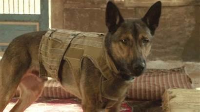 Max Dog War Dogs Military Marines Belgian