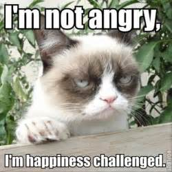 grumpy cats pictures of the day 45 pics