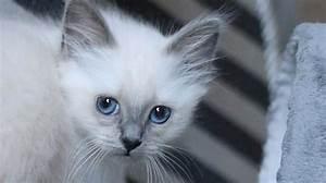 Katzen In Mietwohnung 2016 : weltkatzentag 2016 grace ist die sch nste katze in ganz nrw ~ Lizthompson.info Haus und Dekorationen